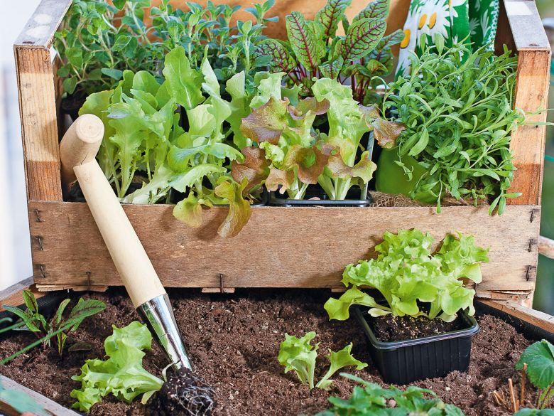 Salat Parade Im Hochbeet Weber Gartencenter Kirchdorf